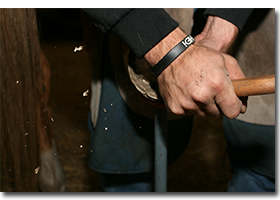 Farrier trimming a horse