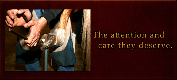 Farrier The attention and care they deserve